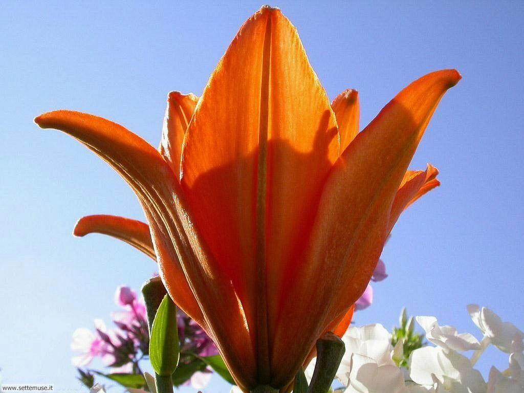 fiori 3 11
