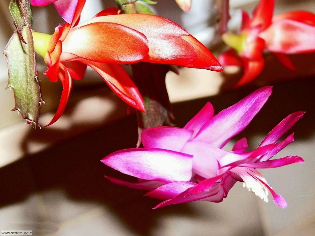 fiori 3 13