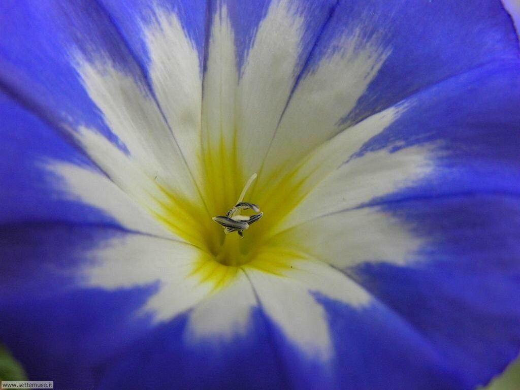 fiori 3 14