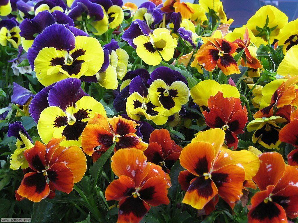 fiori 3 19