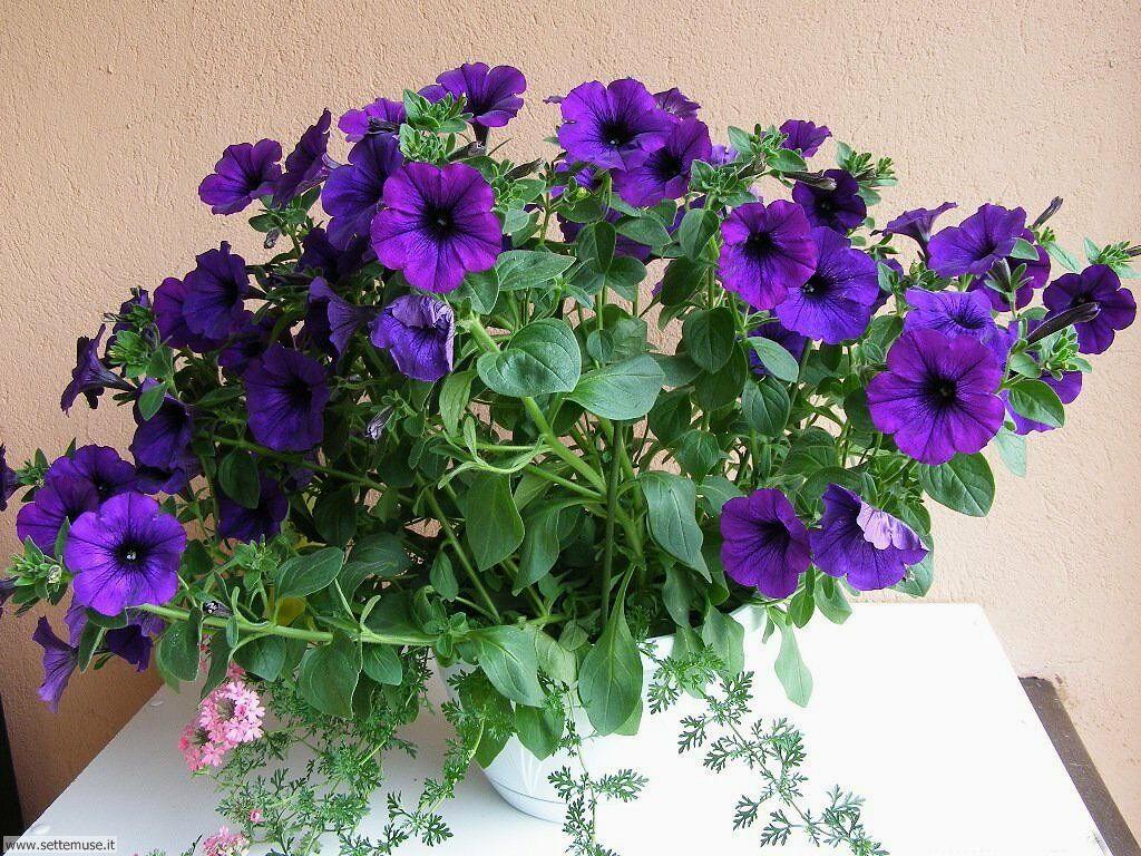 fiori 3 025