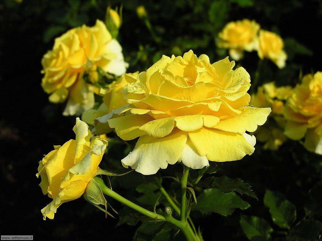 fiori 3 029