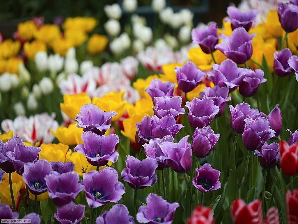 fiori 3 031