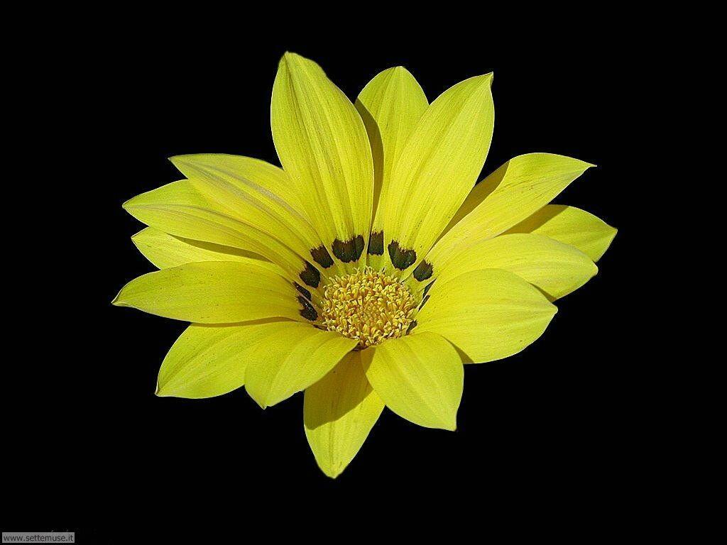 fiori 3 045