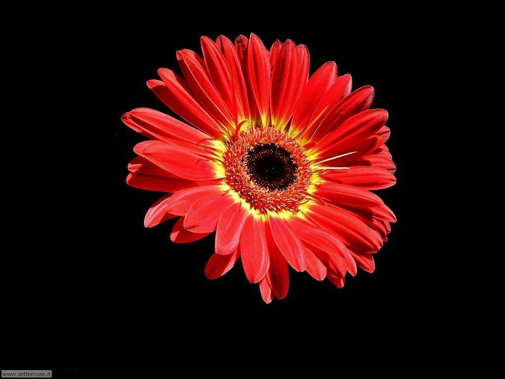 fiori 3 047