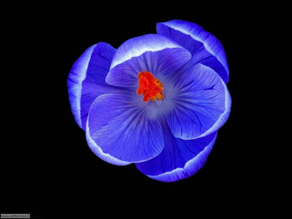 fiori 3 048