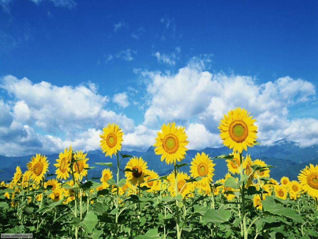 Foto fiori di prato per sfondi for Immagini desktop primavera