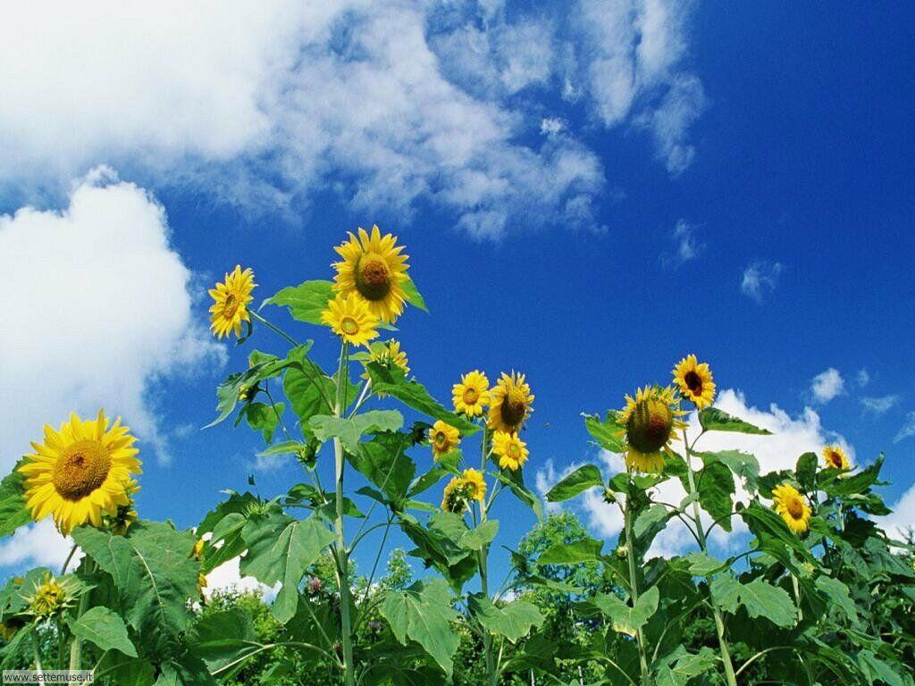 Foto fiori di prato per sfondi for Piante fiori
