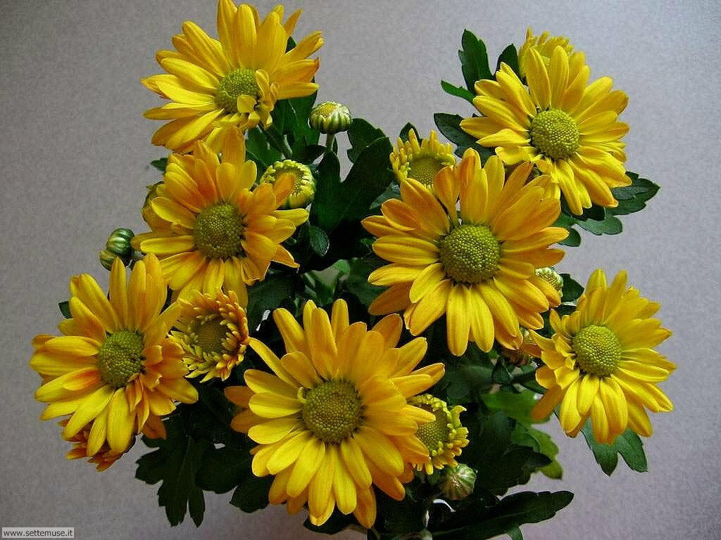 foto di fiori recisi 1 per sfondi