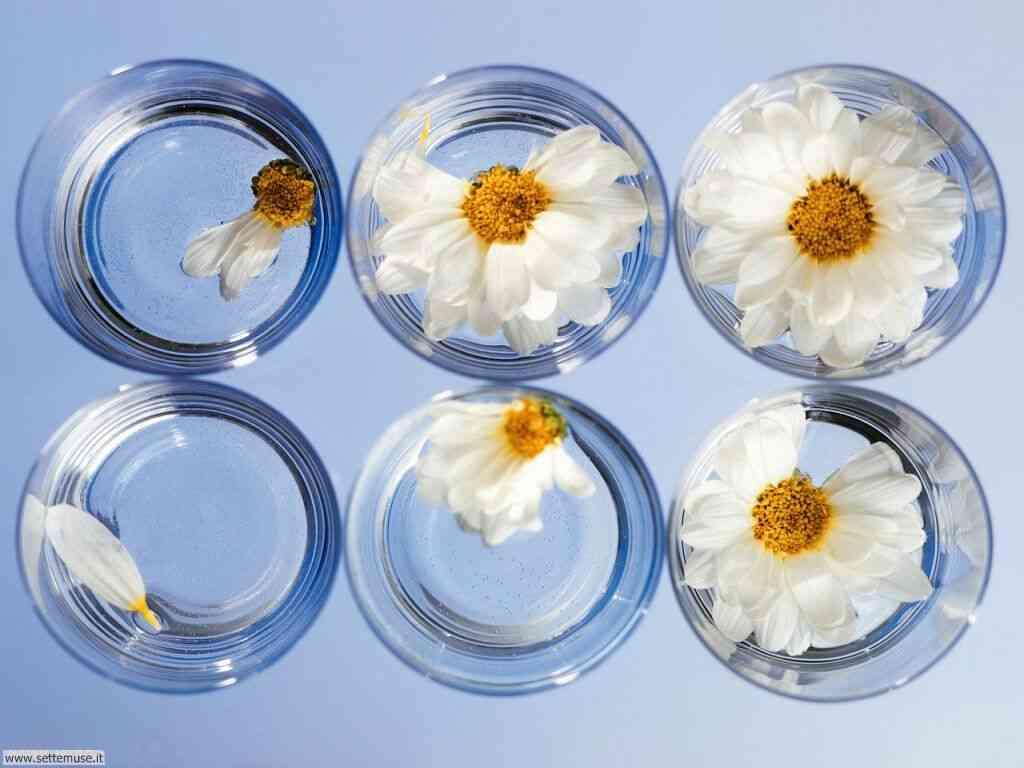 foto di fiori recisi pag. 2 per sfondi