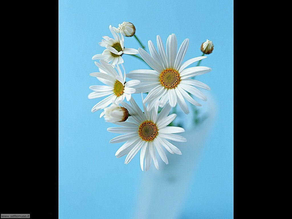 fiori singoli 3