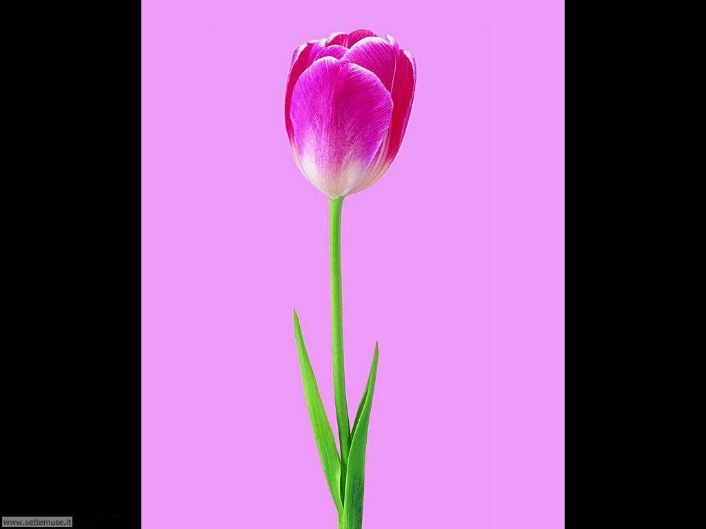 foto di fiori singoli per sfondi