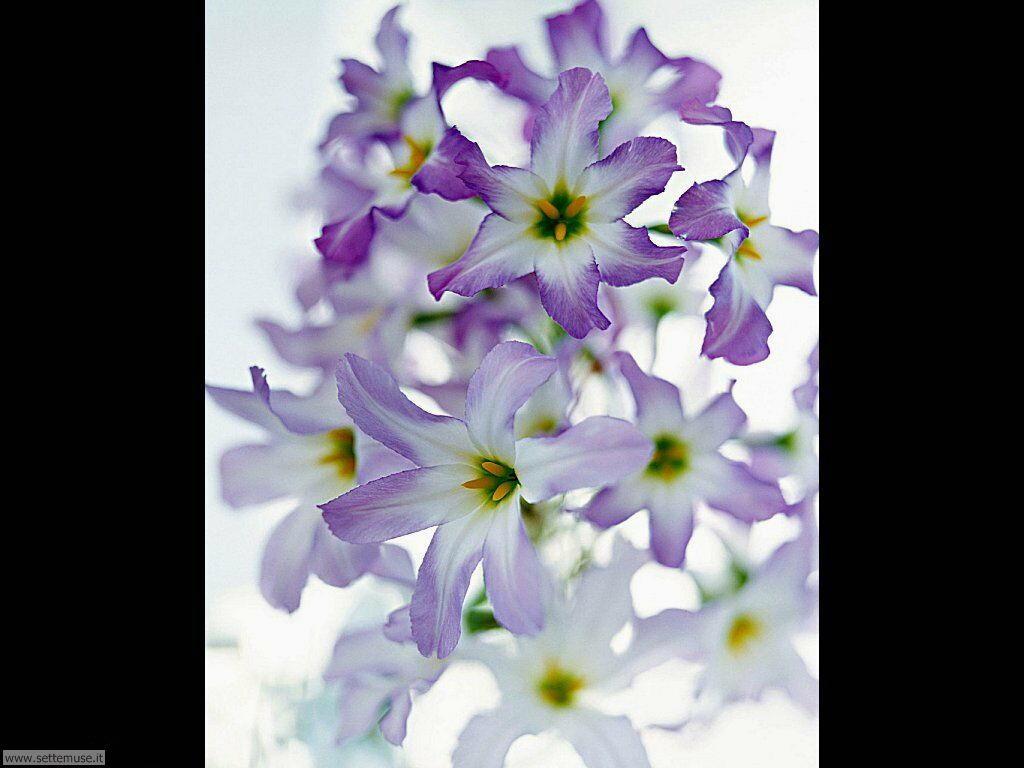 fiori singoli 6