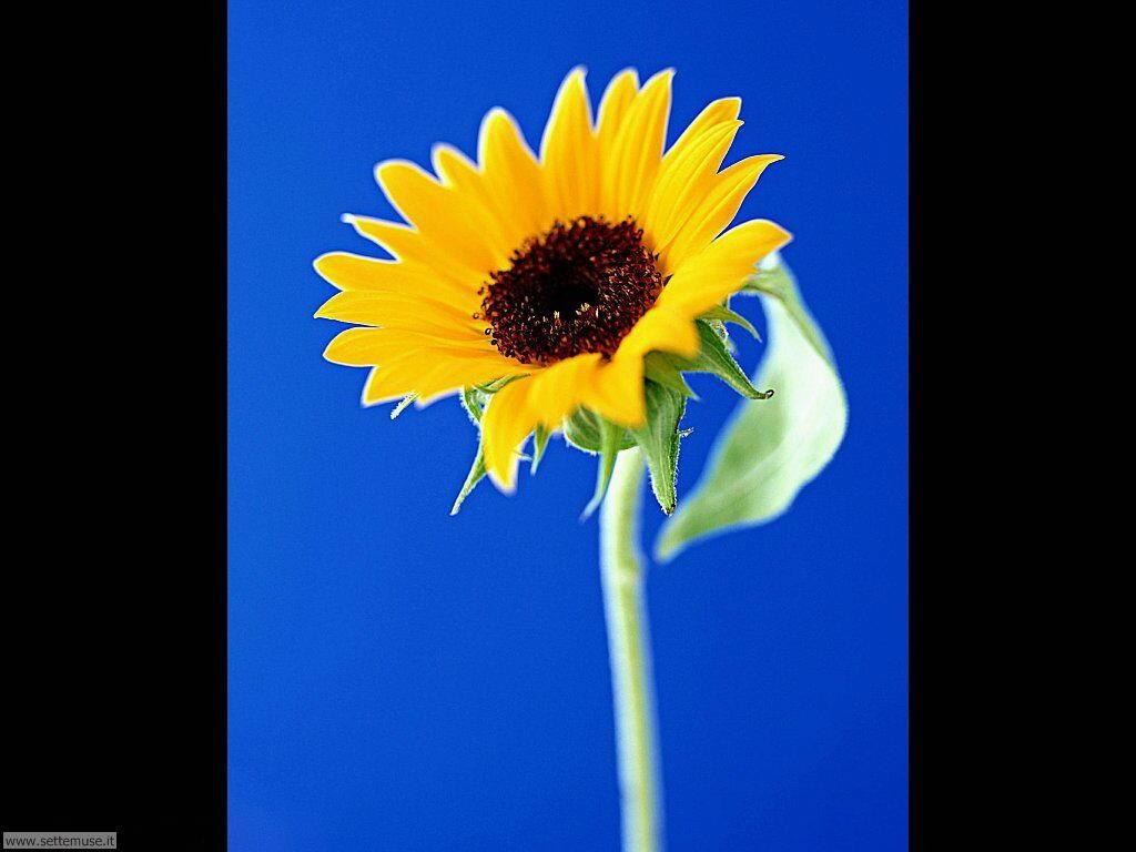 fiori singoli 11