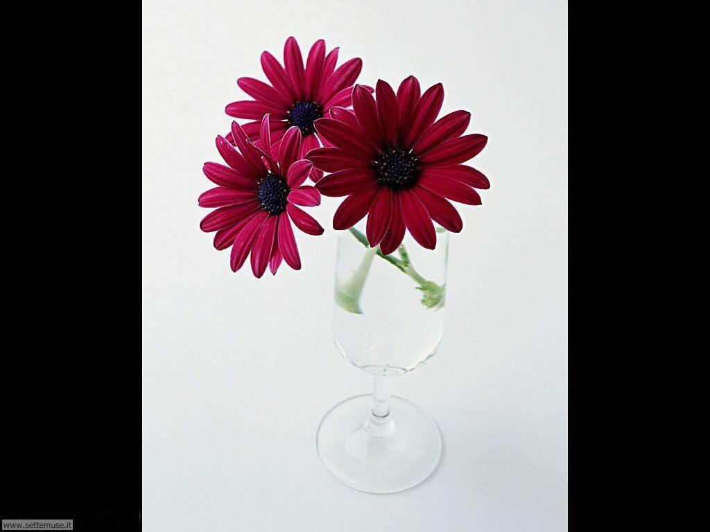 fiori singoli 13
