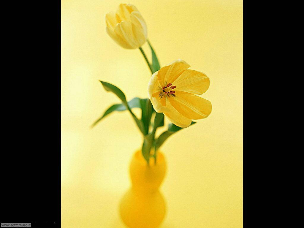fiori singoli 14