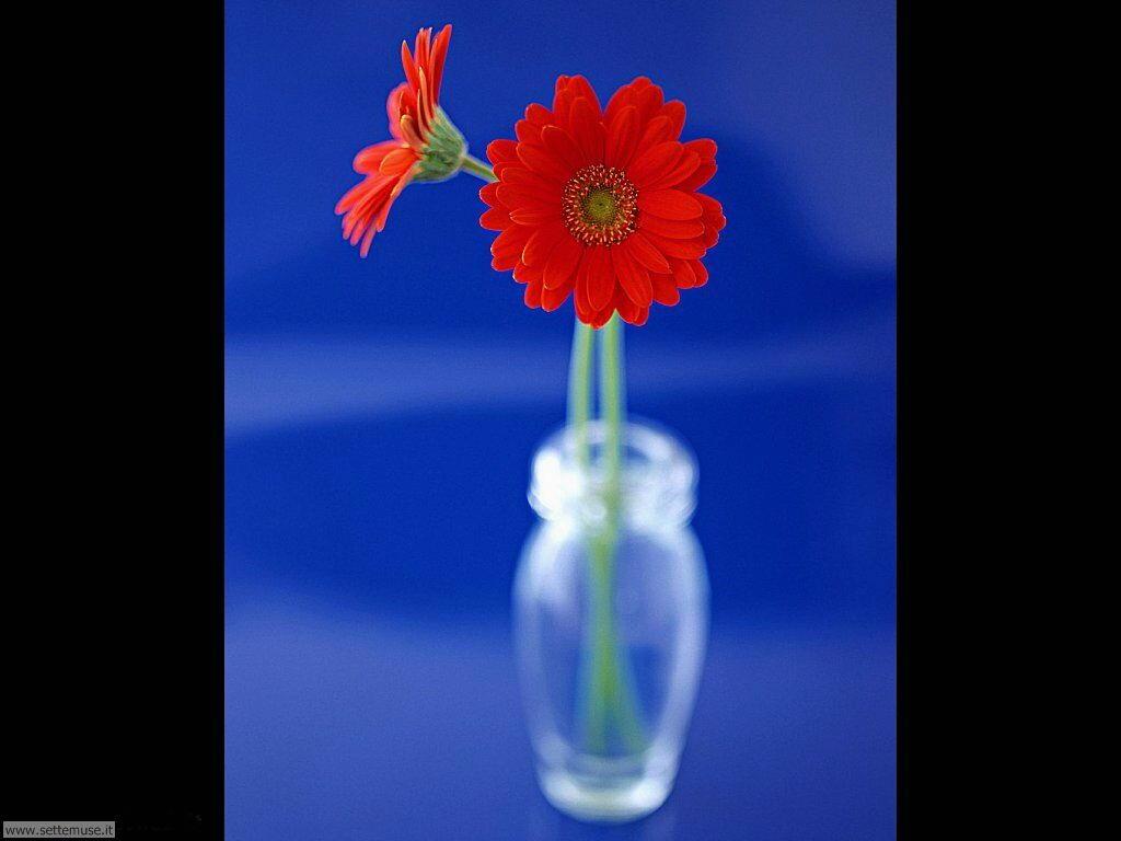 fiori singoli 19