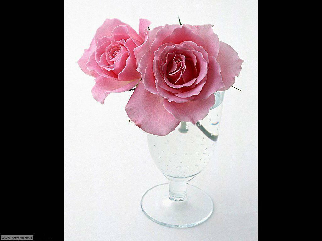 fiori singoli 022