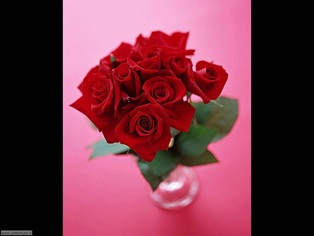 fiori singoli 024