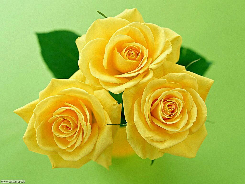 fiori singoli 026