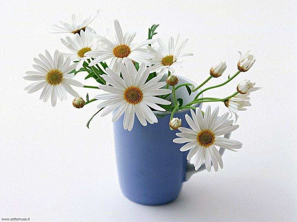 fiori singoli 027