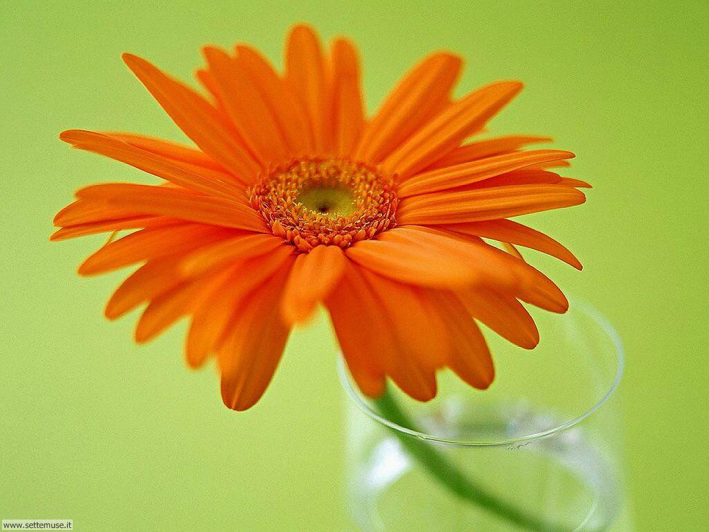 fiori singoli 029