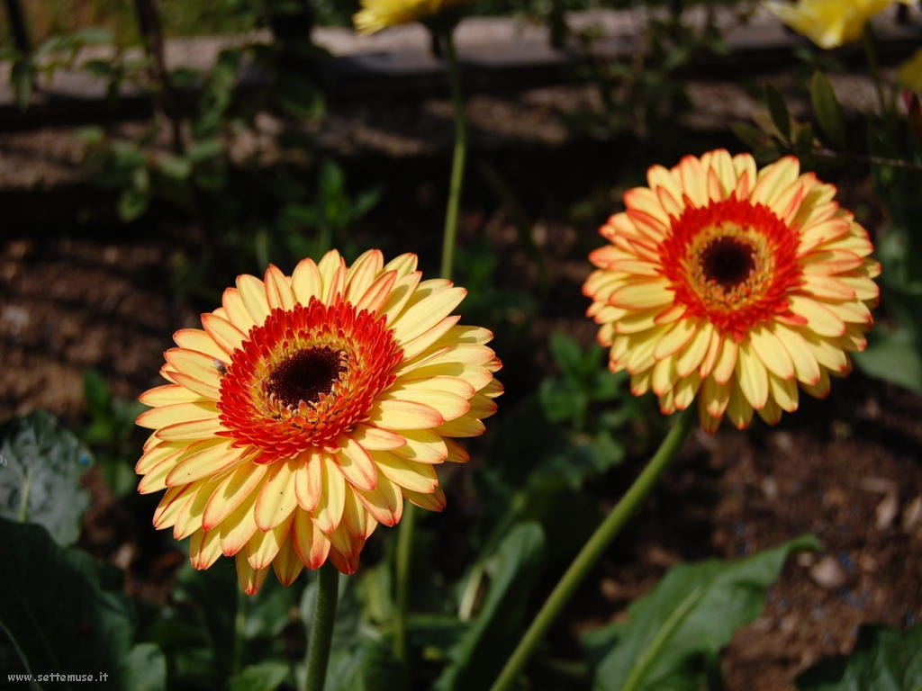 Slideshow foto fiori singoli for Fiori stilizzati immagini
