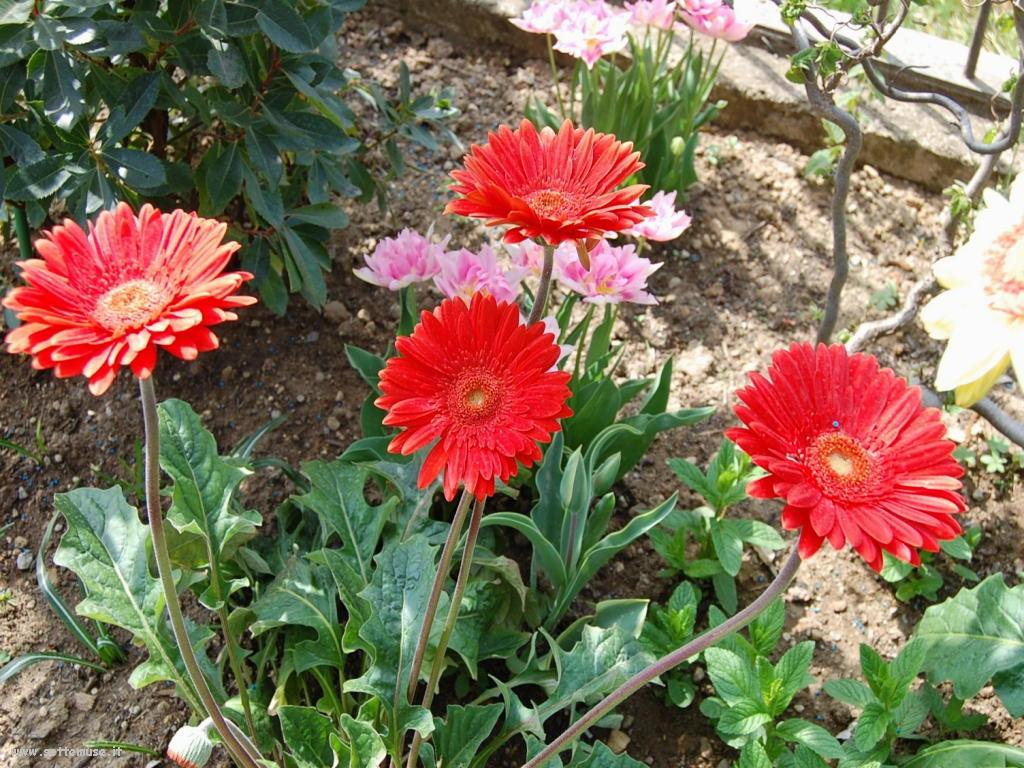 Slideshow foto fiori singoli for Piante fiori