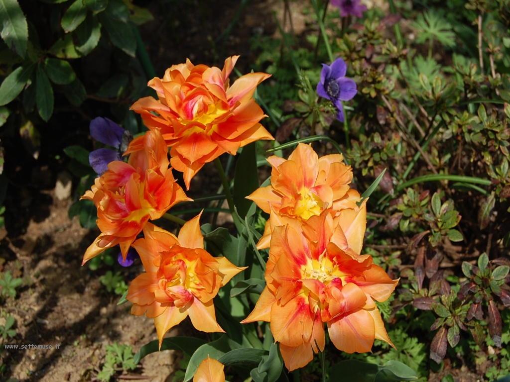 Foto fiori singoli per sfondi for Piante fiori