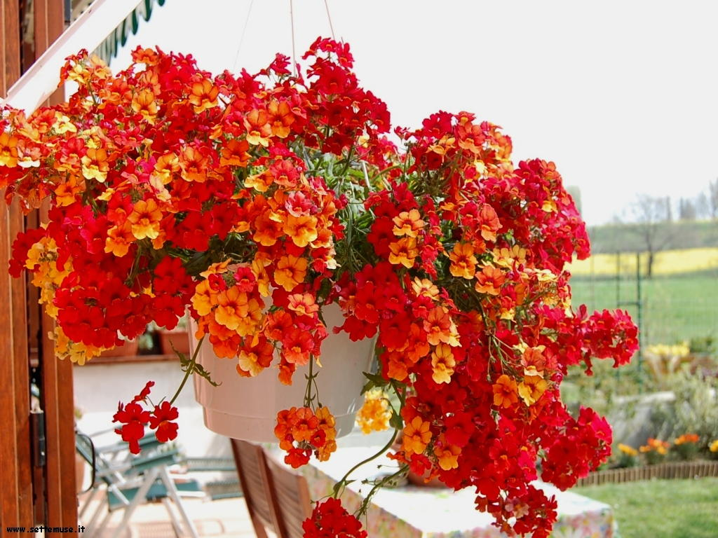 fiori singoli 031