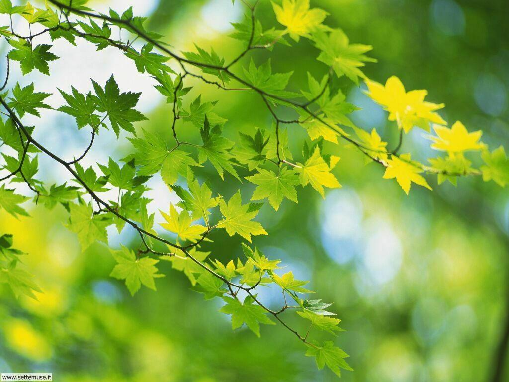 foglie 3