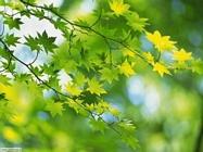 Foto sfondi Piante e fiori