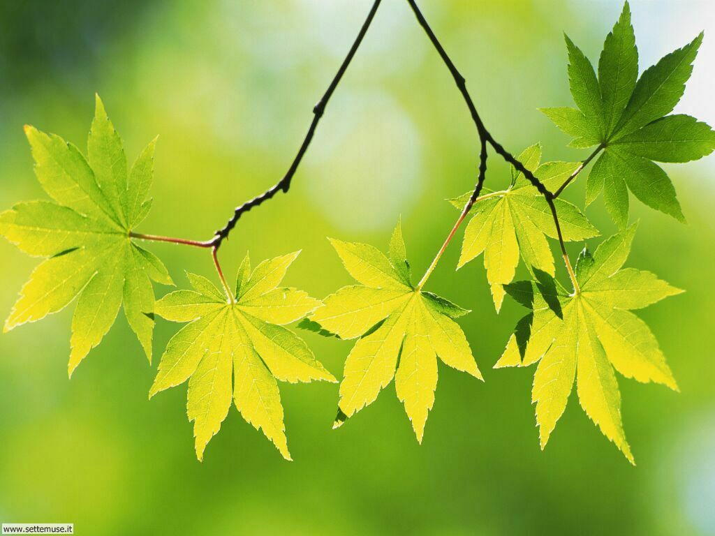 foglie 4