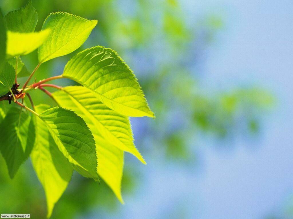 foglie 5