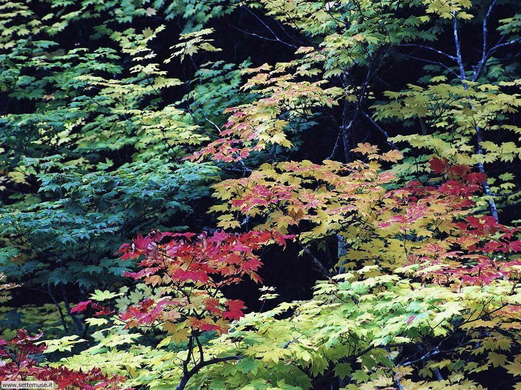 foglie 8