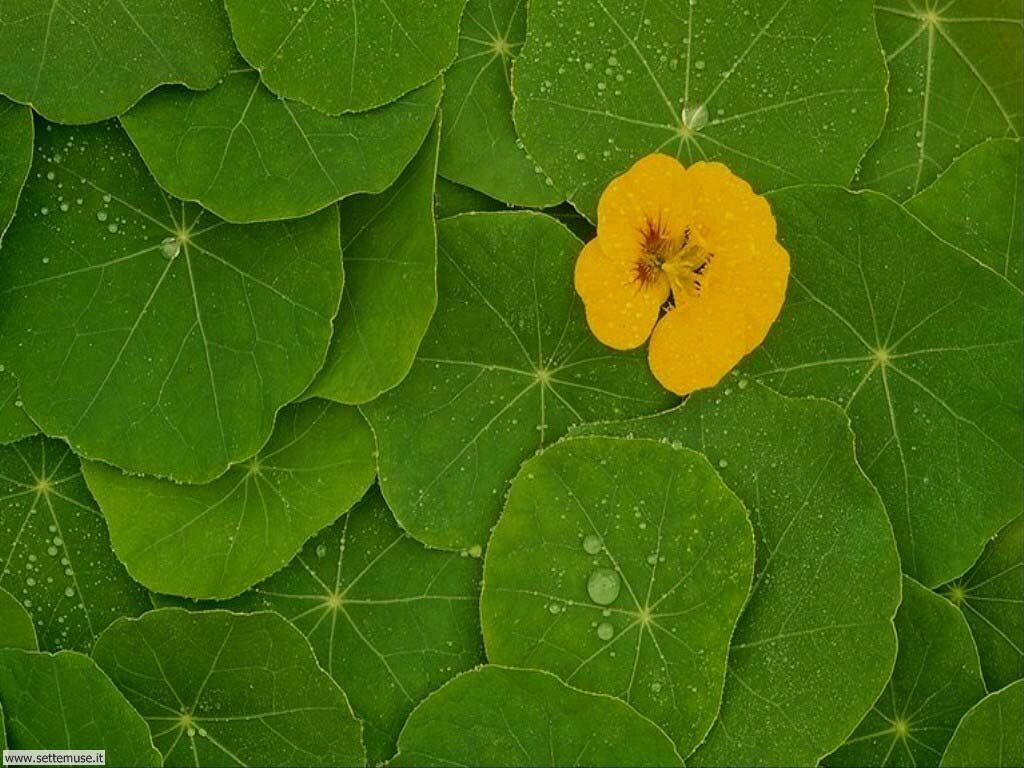 foglie 15