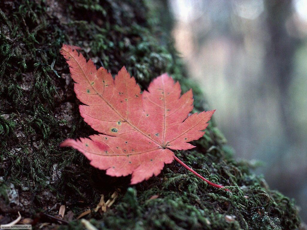foglie 022