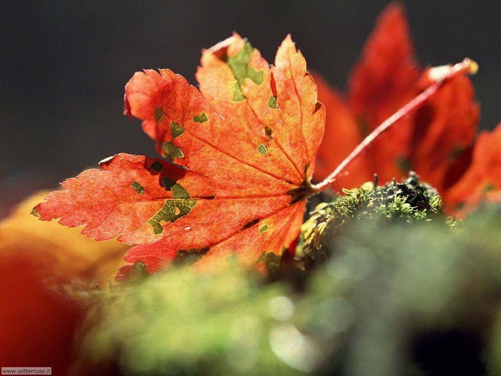 foto di foglie per sfondi