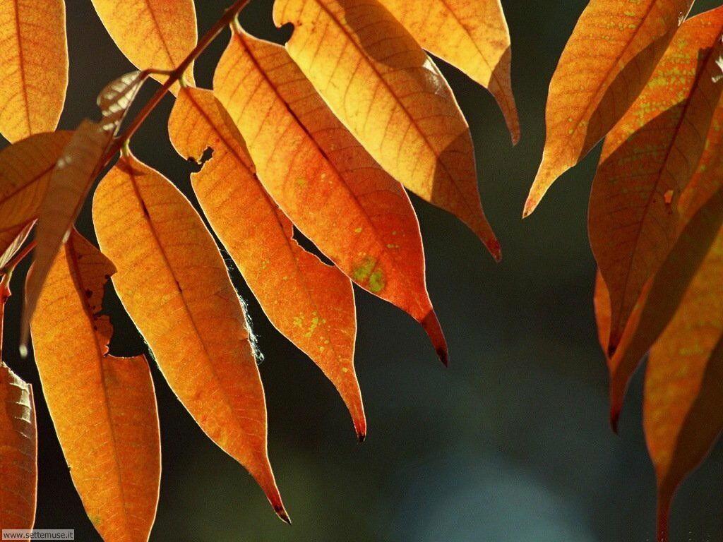 foglie 025