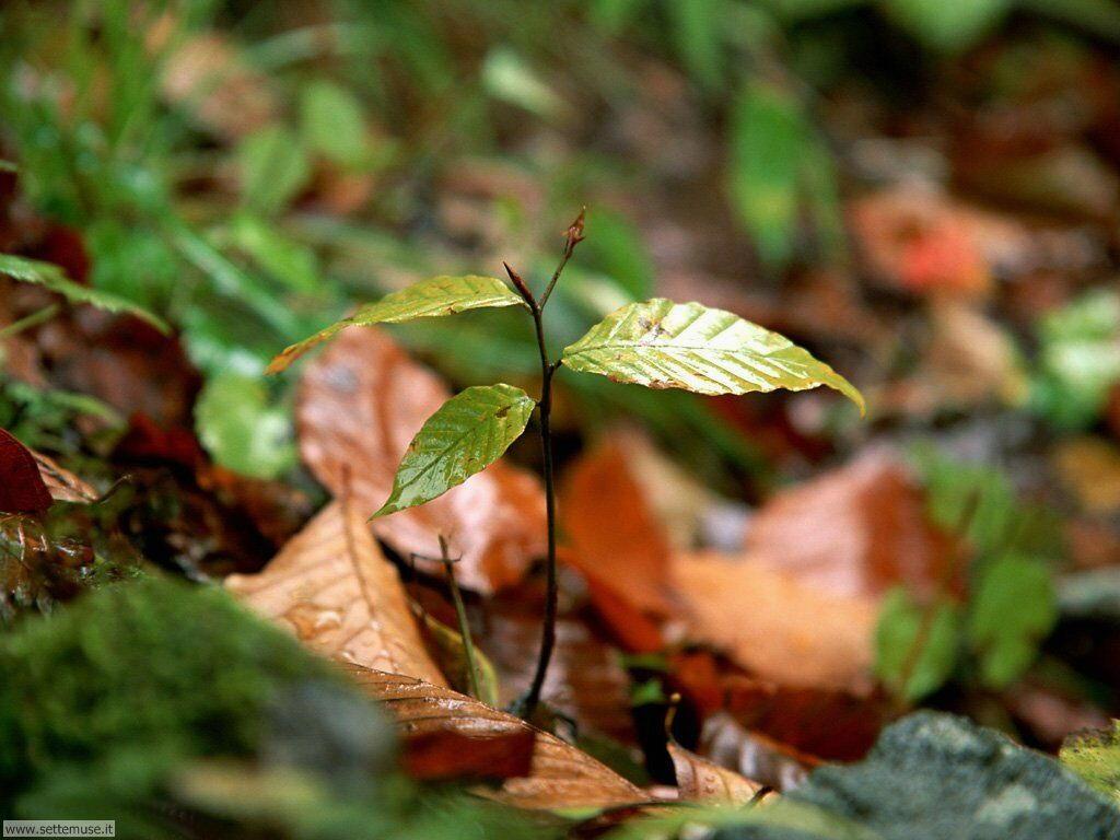 foglie 026