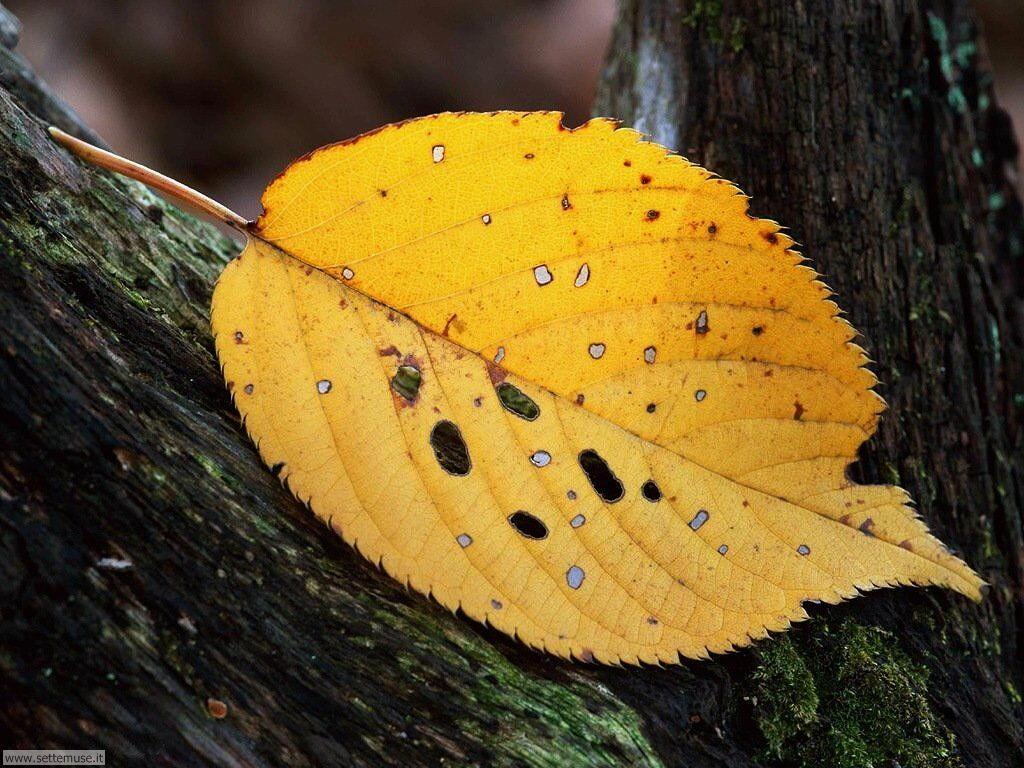 foglie 027
