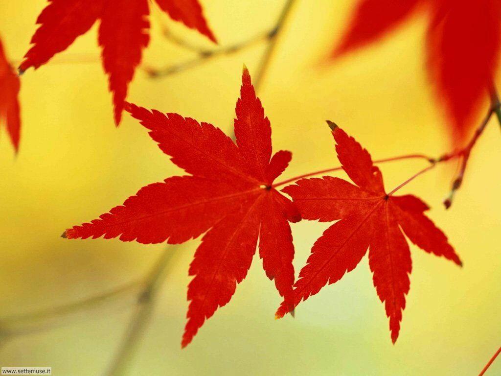 foglie 028