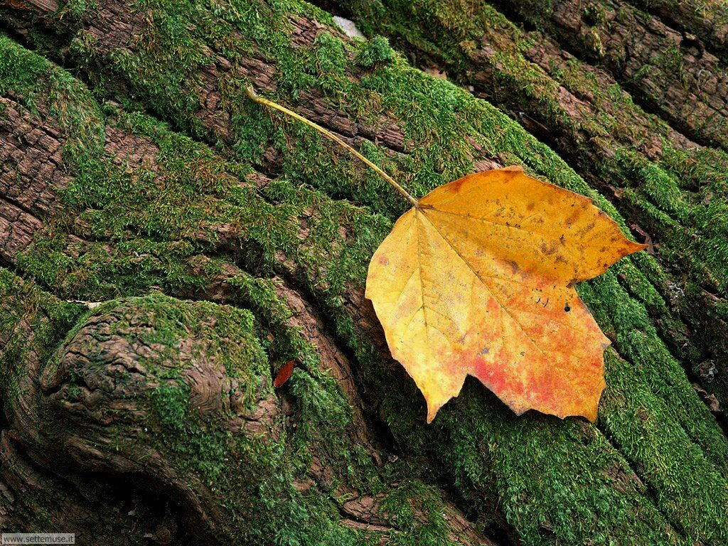 foglie 031
