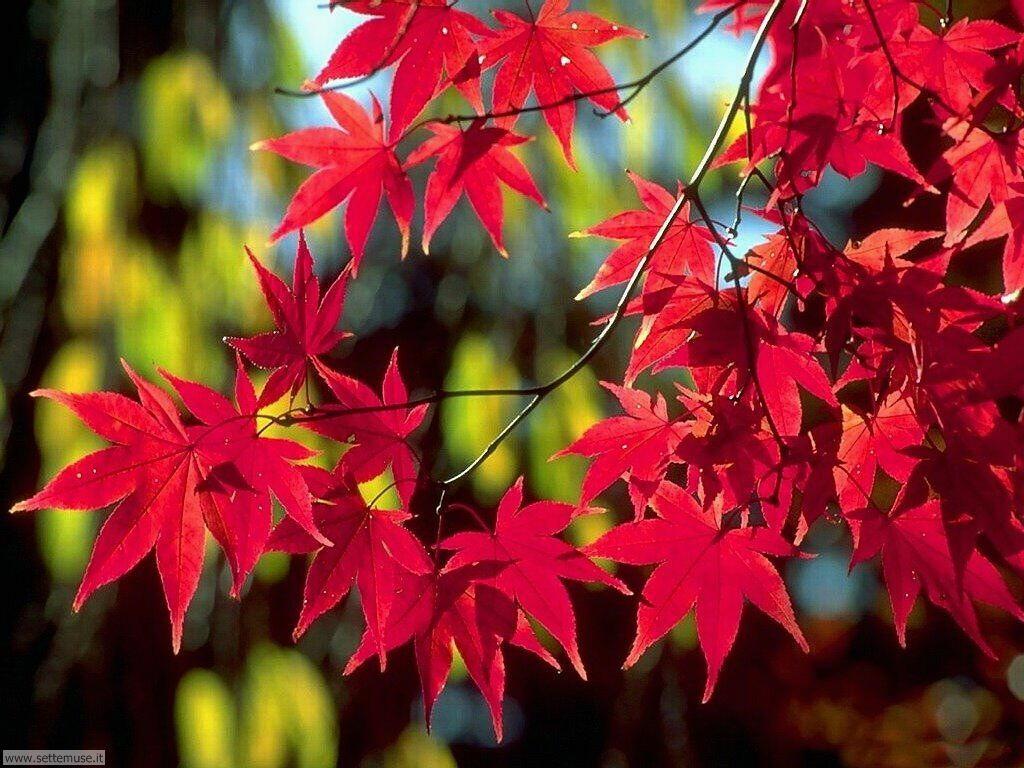 foglie 036