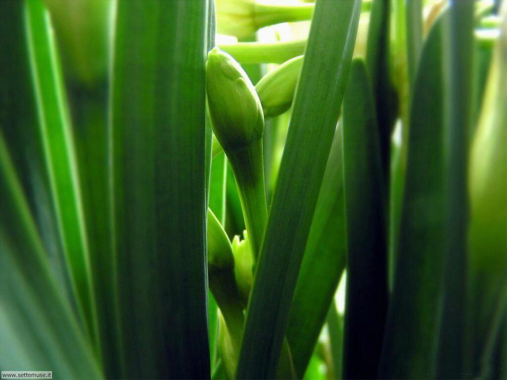 foglie 050