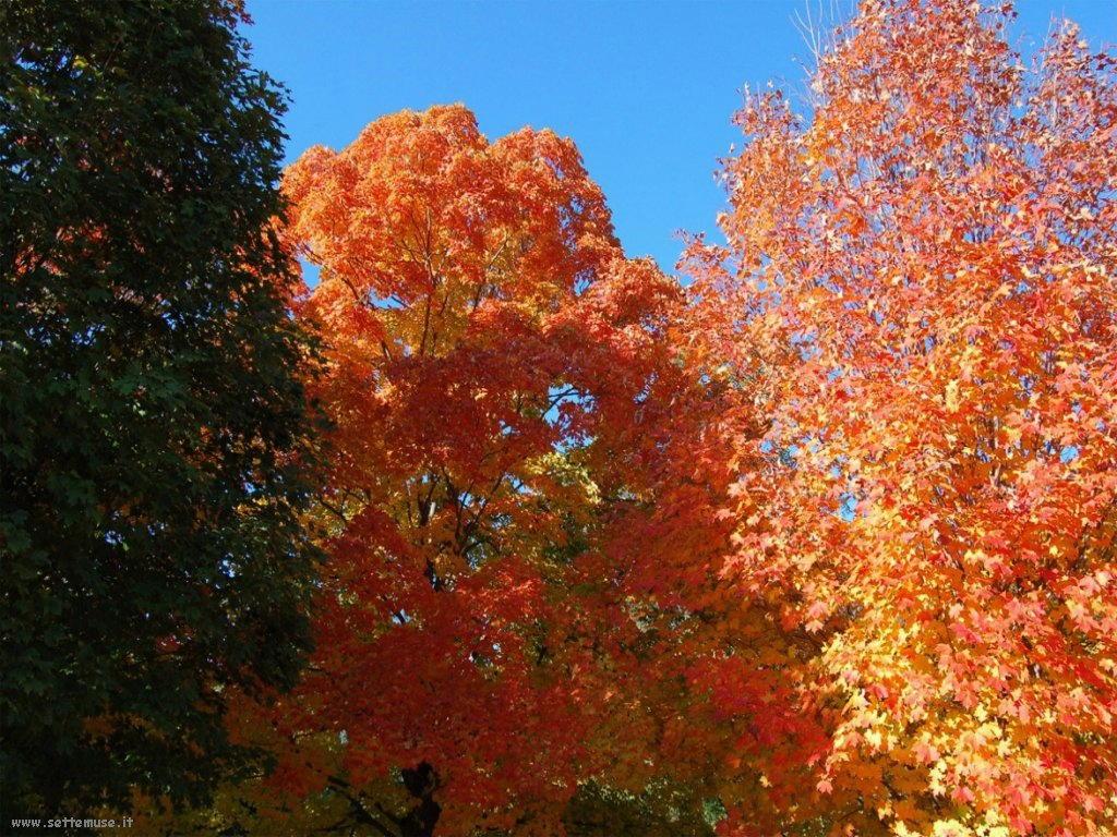 foto di foglie 110