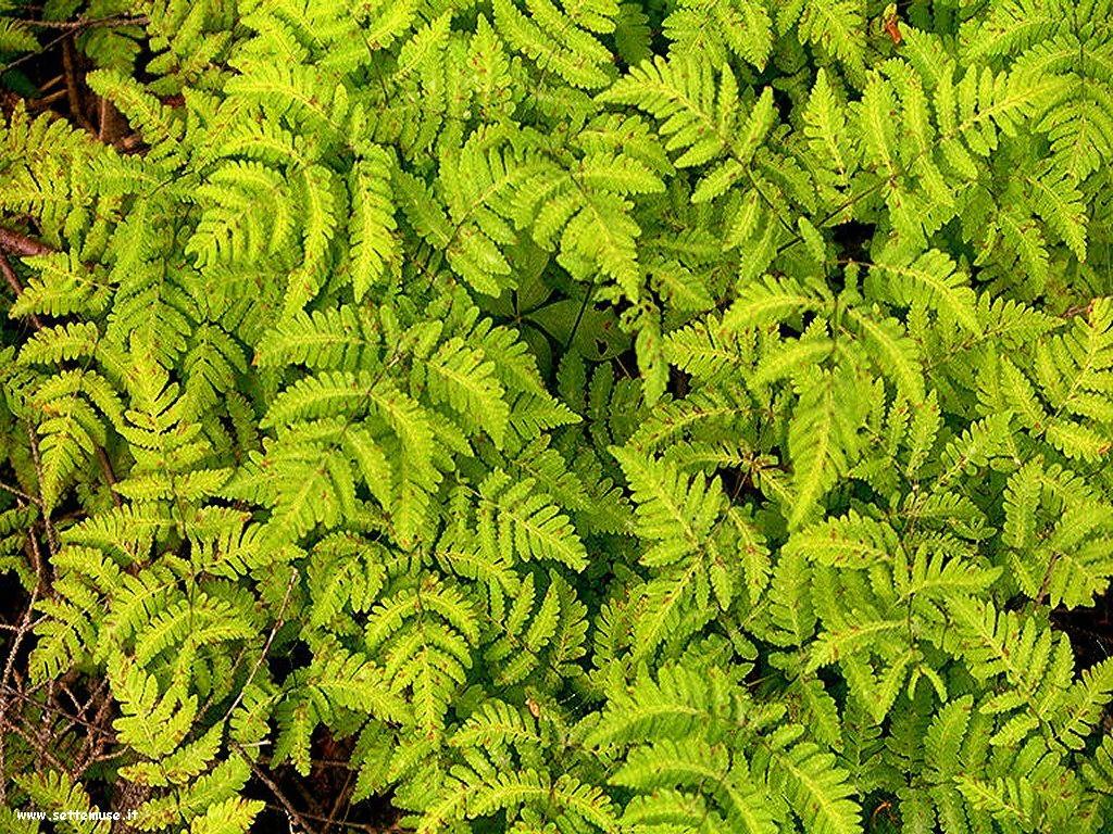 foto di foglie 115