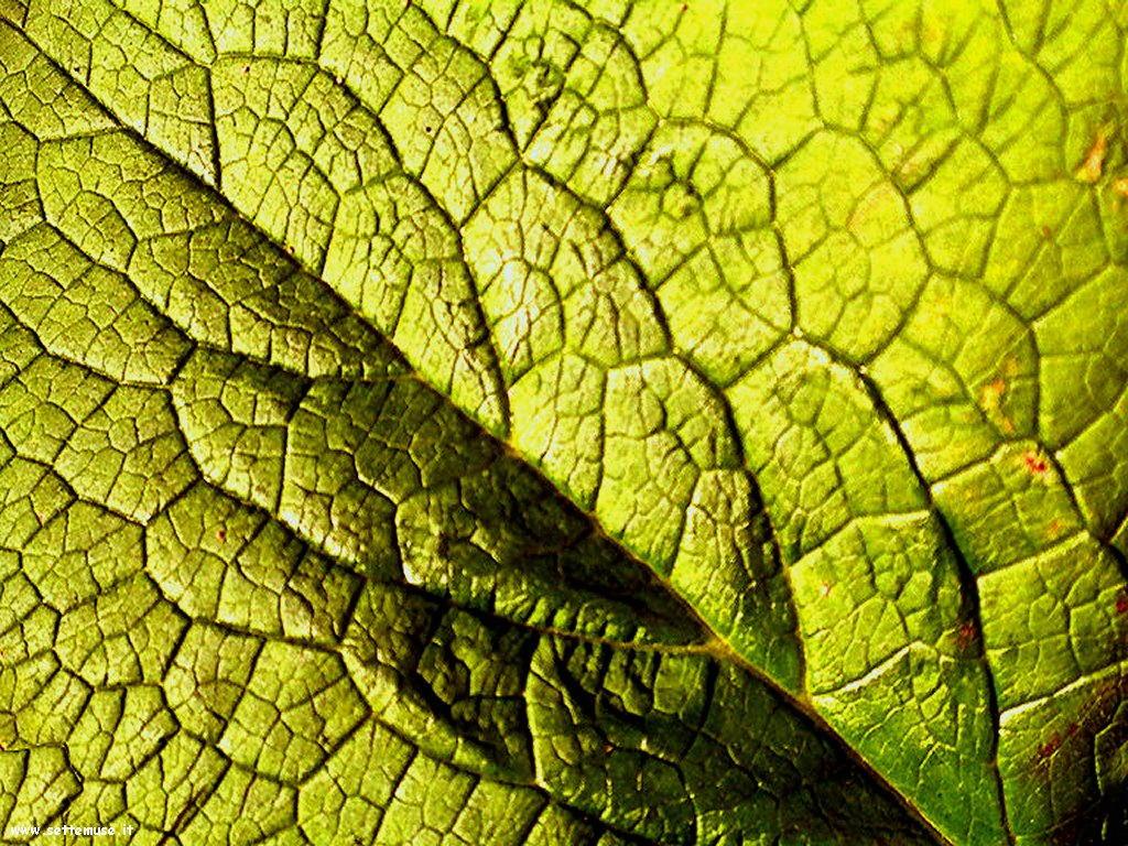 foto di foglie 116