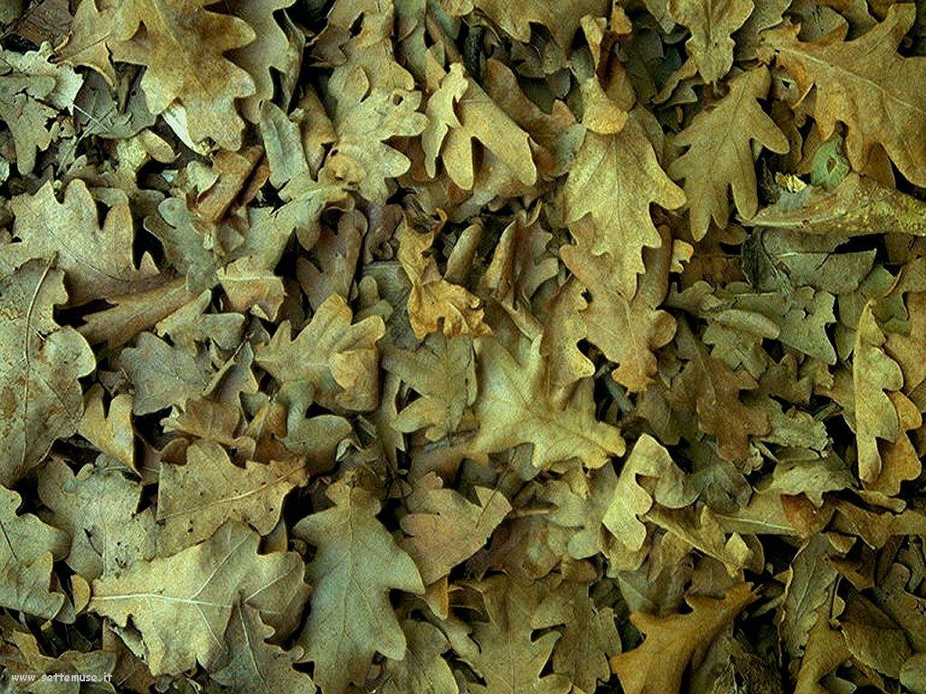 foto di foglie 117