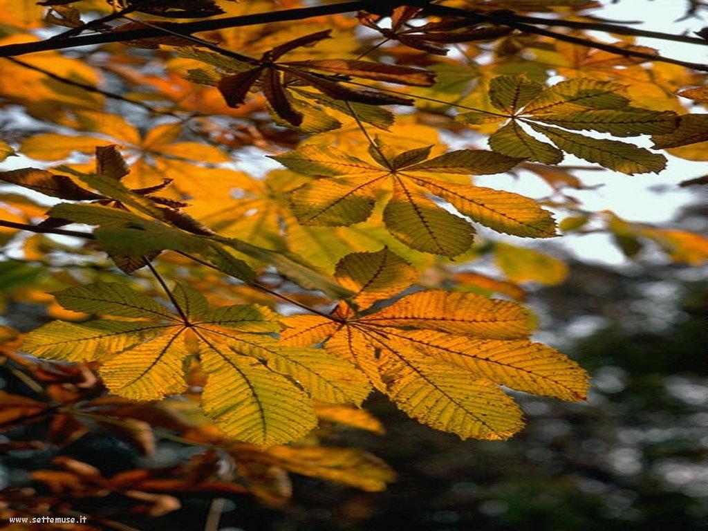 foto di foglie 118